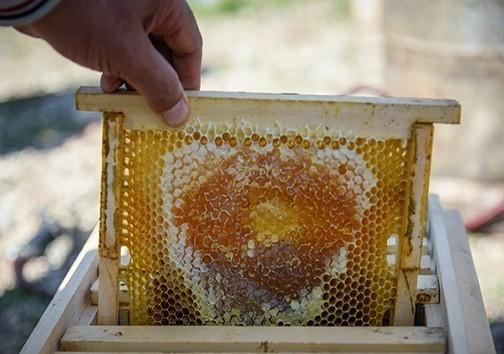آزمايشگاه عسل